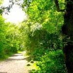 Mygrantour-paris-Le-Jardin-Agronomie-Tropicale